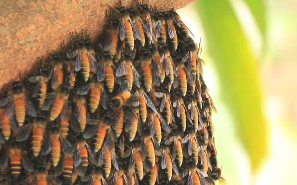 July-Video-Bees