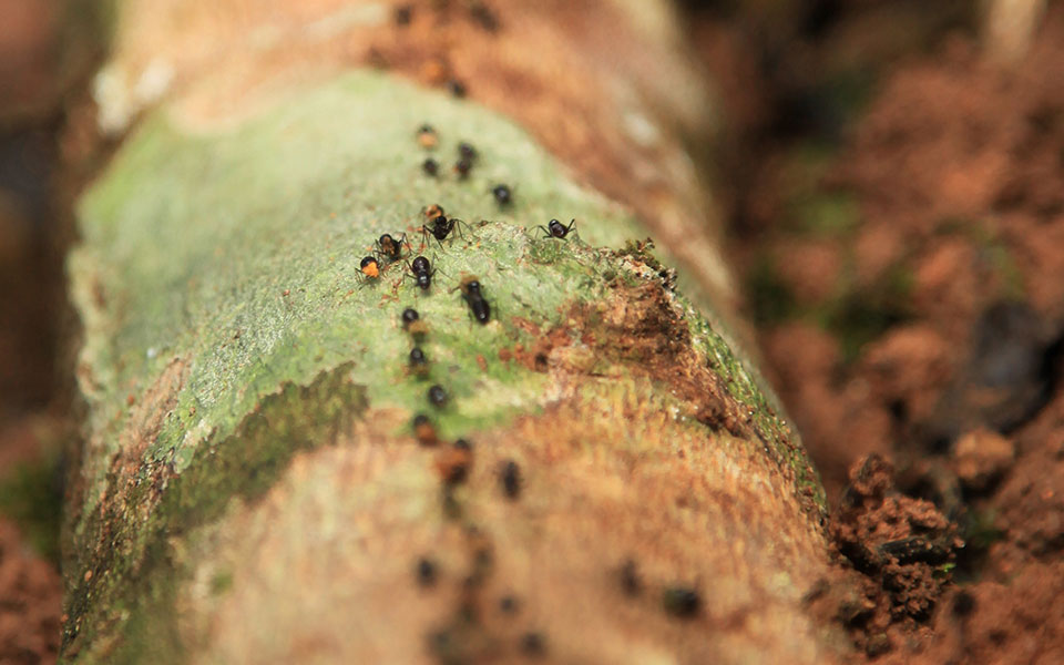 Why Do Ants Crawl In A Line