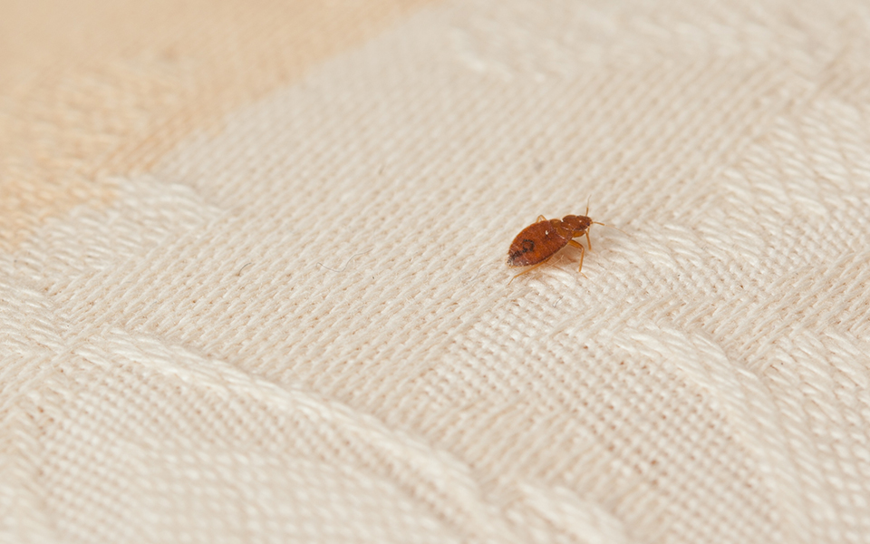 Fewer Hospitals Could Mean More Bed Bugs At Your Facility