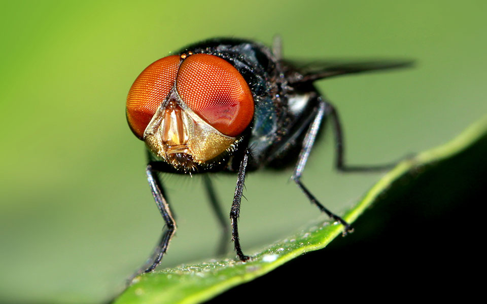 How Do Flies See The World?
