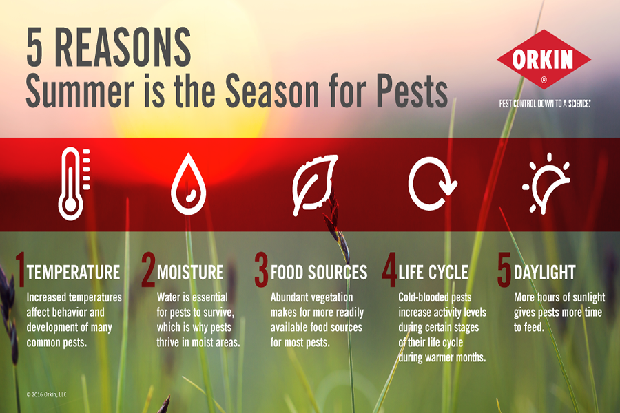 5 Reasons Summer is the Season for Pests