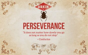 01-BugWisdom-Perseverance-DungBeetle