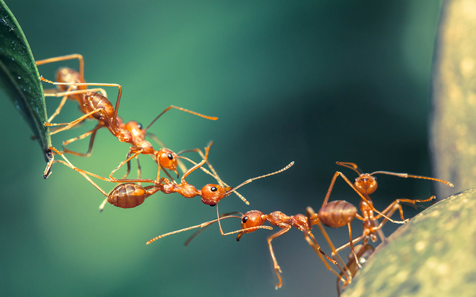 Ants Behave Like Solids and Liquids