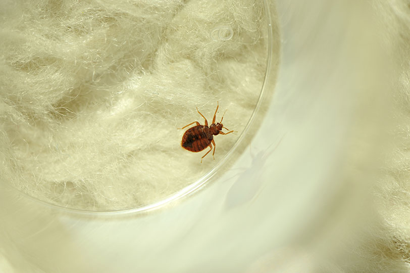 10 Frequently Asked Questions About Bed Bugs in the Healthcare Environment
