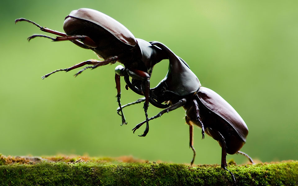 Weird Insect Competitions From Around The World